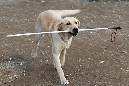 В Москве у незрячей девушки украдена собака-поводырь