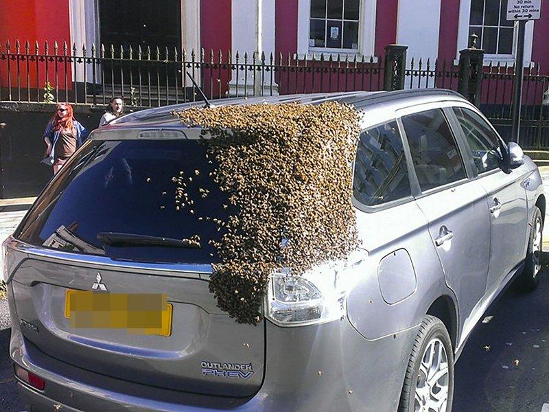 Двадцать тысяч пчел два дня преследовали автомобиль британца