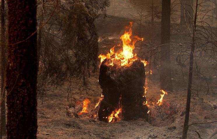 МЧС: превышение ПДК в воздухе в Москве не представляет угрозы для здоровья горожан