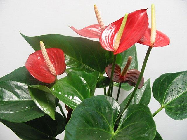 Ох, уж этот манящий запах орхидей!
