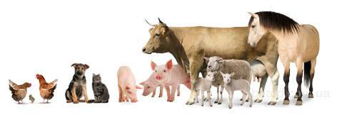 Как увеличить основные показатели, не нарушив при этом здоровье животного?