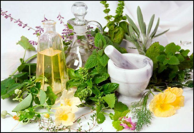 Использование лекарственных трав при лечении