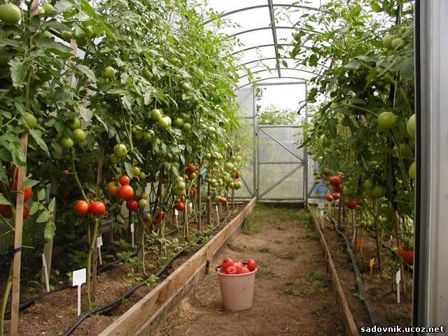 Как собрать грандиозный урожай?