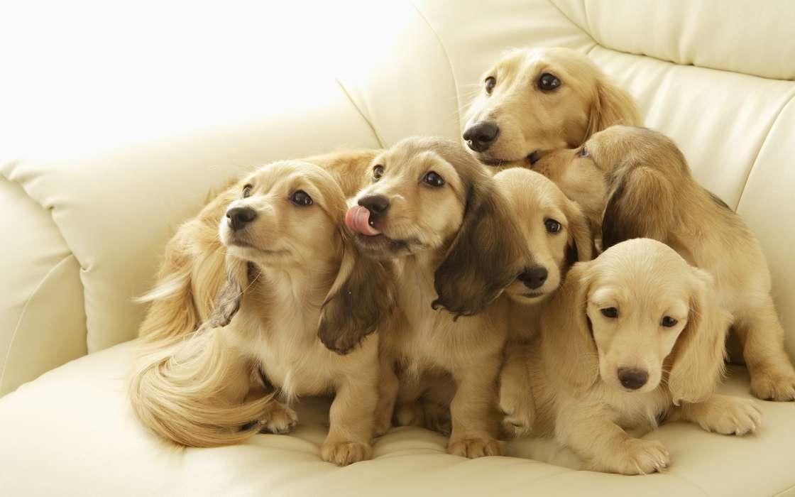В мини-приюте семейного типа животных обучают дружить с людьми