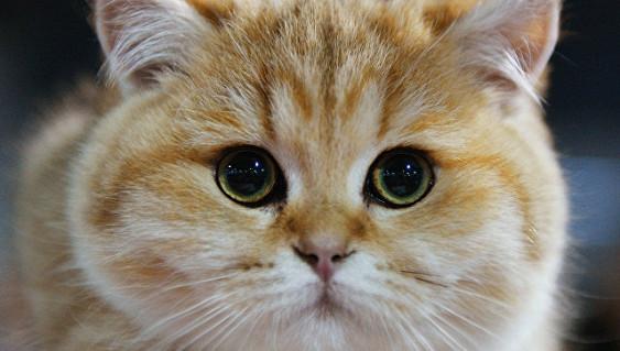 Возможно скоро россиянам ограничат количество животных в квартире