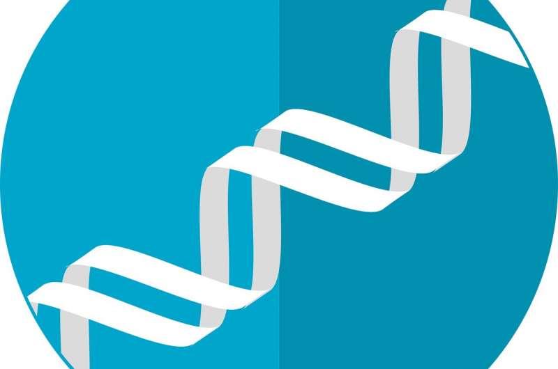 Учёные обнаружили гены, связанные с риском COVID-19