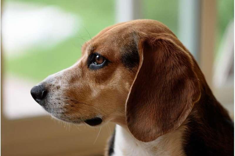 Исследование показало, что домашние животные и их владельцы питаются одинаково