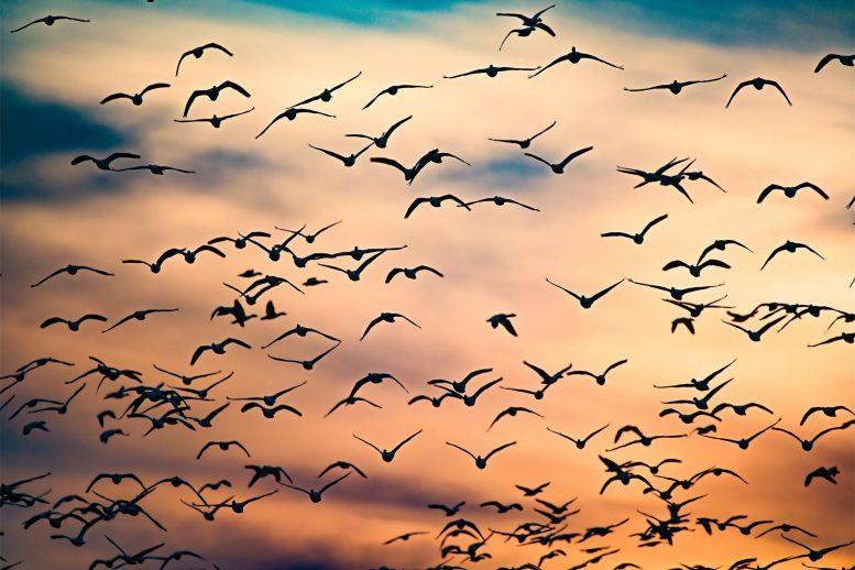 Исследование показало, что в мире обитает более 50 миллиардов птиц