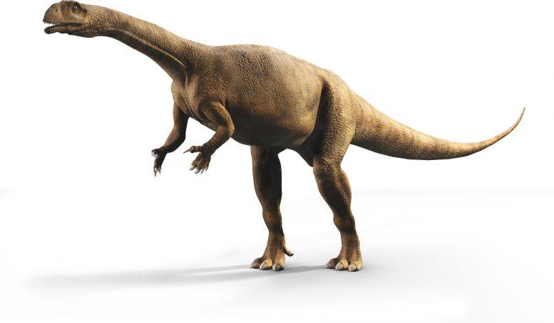 У южноафриканских динозавров был крайне неравномерный рост