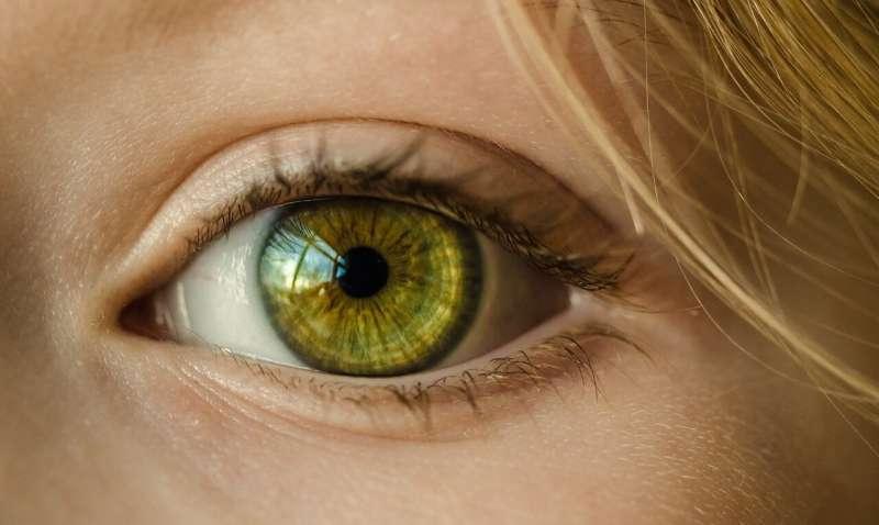 Учёные выяснили, как пристальный взгляд на экран влияет на зрение человека