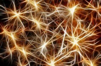 Учёные рассказали, как клетки мозга компенсируют ущерб от инсульта