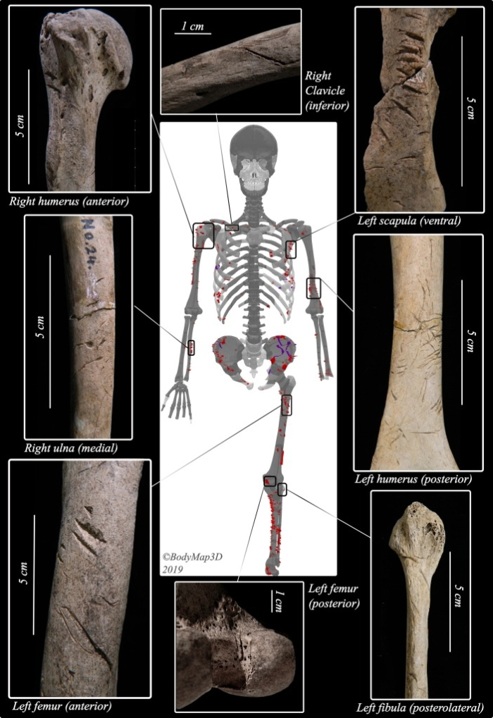 Кости 3000-летнего возраста раскрывают самую старую жертву встречи с акулами из когда-либо обнаруженных