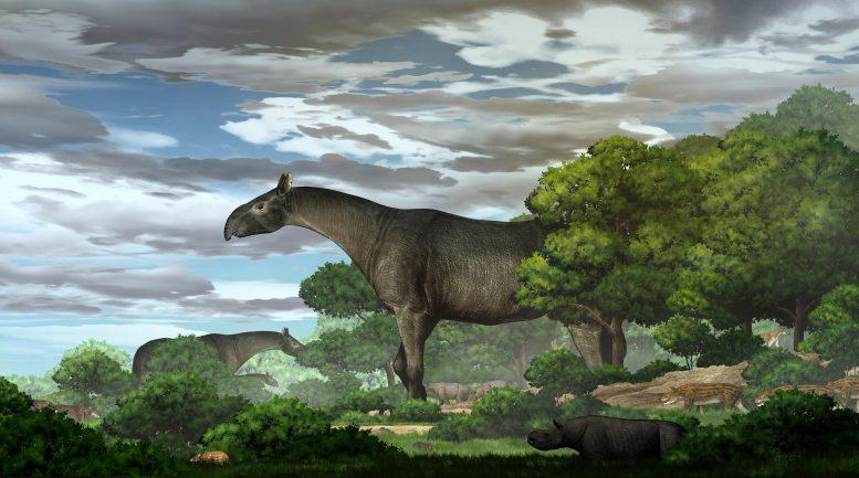 Новый вид гигантского носорога открывает ключ к разгадке давней тайны