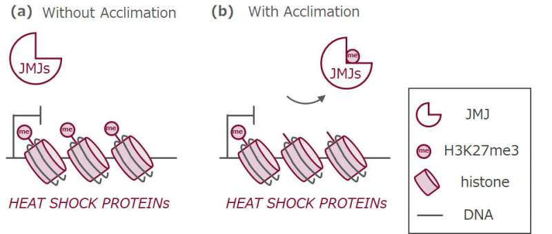 Механизм памяти позволяет растениям адаптироваться к тепловому стрессу