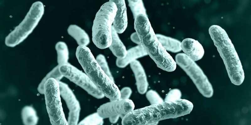 Учёные заманили бактерии в эволюционную ловушку для снижения устойчивости к лечению