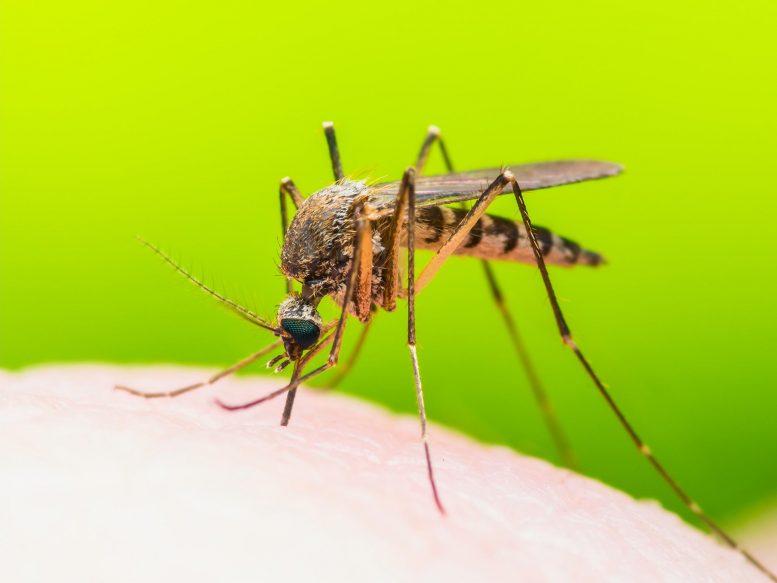 Новая мРНК-вакцина обеспечивает полную защиту мышей от малярии