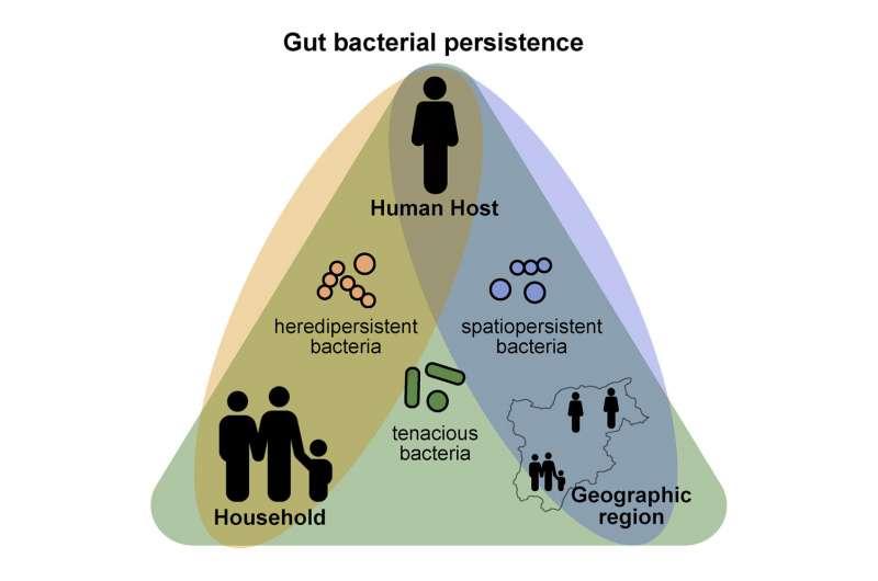 Устойчивость организма окупается микробиомом кишечника человека