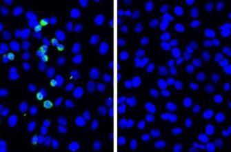 Учёные открыли новый механизм защиты от коронавируса SARS-CoV-2