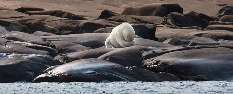 Учёные предупреждают, что может наступить необратимый переломный момент в Арктике