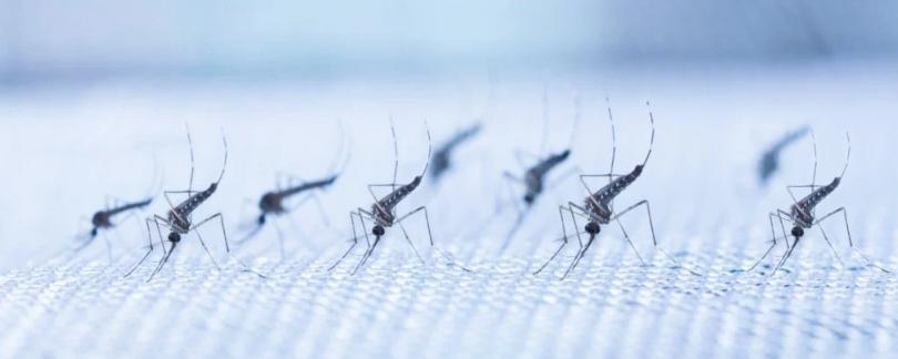 Передача лихорадки денге сократилась на 77% в ходе реальных испытаний