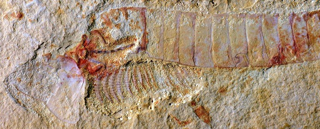 Невероятное открытие окаменелостей показывает мозг древнего животного 310 миллионов лет назад