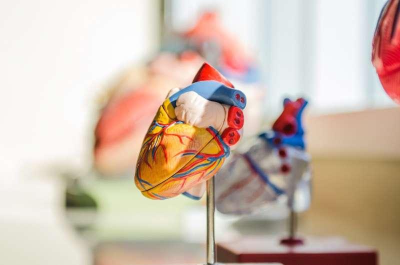 Динамическая модель сердца имитирует гемодинамические нагрузки