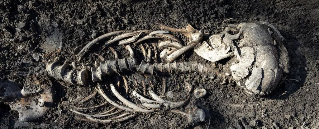 Младенцы-близнецы викингов найдены в захоронении в Швеции