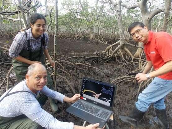 Недостаток видовой глубины угрожает мангровым зарослям