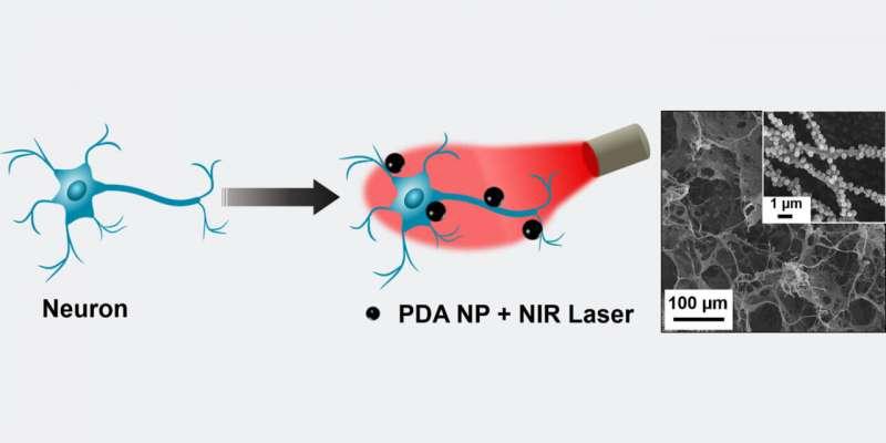 Наночастицы выделяют тепло из света, чтобы управлять электрической активностью нейронов