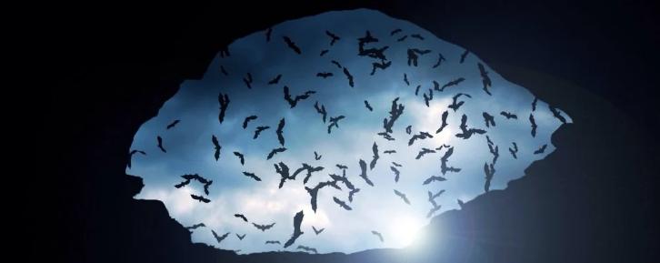 В аргентинской пещере найдены останки гигантской летучей мыши-вампира