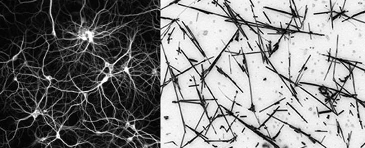 Искусственная сеть, находящаяся на «краю хаоса», действует так же, как человеческий мозг