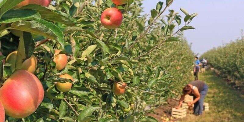 Распространенный пестицид будет запрещен из-за связи с неврологическими проблемами у детей