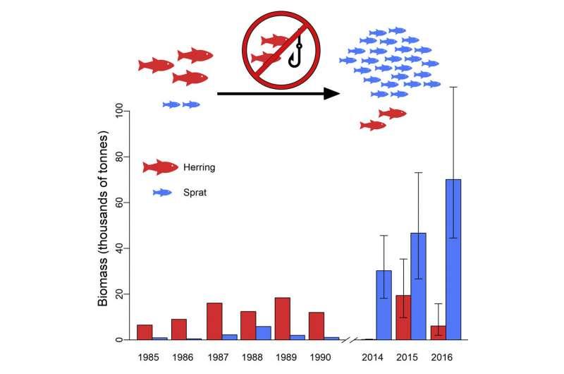 В море Клайда процветают маленькие рыбки 'Vital'
