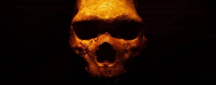 Неандертальцы имели такую же группу крови, как и мы, сообщили учёные