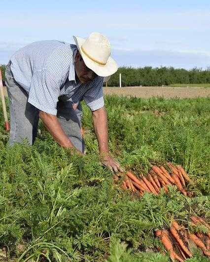 Исследование оценило риск того, что продаваемые в США фрукты и овощи являются продуктами принудительного труда