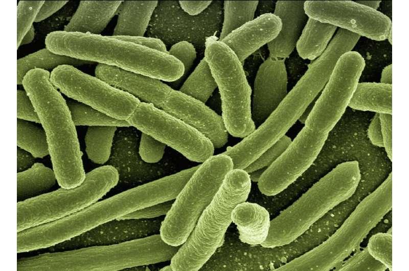 Бактерии могут научиться предсказывать будущее