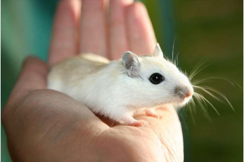 Одинокие мыши более общительные после изоляции