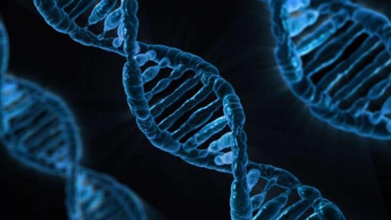 Доказательства того, как ключевой фактор транскрипции управляет доступом к ДНК