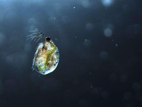 Пресноводные экосистемы в опасности из-за использования глифосата