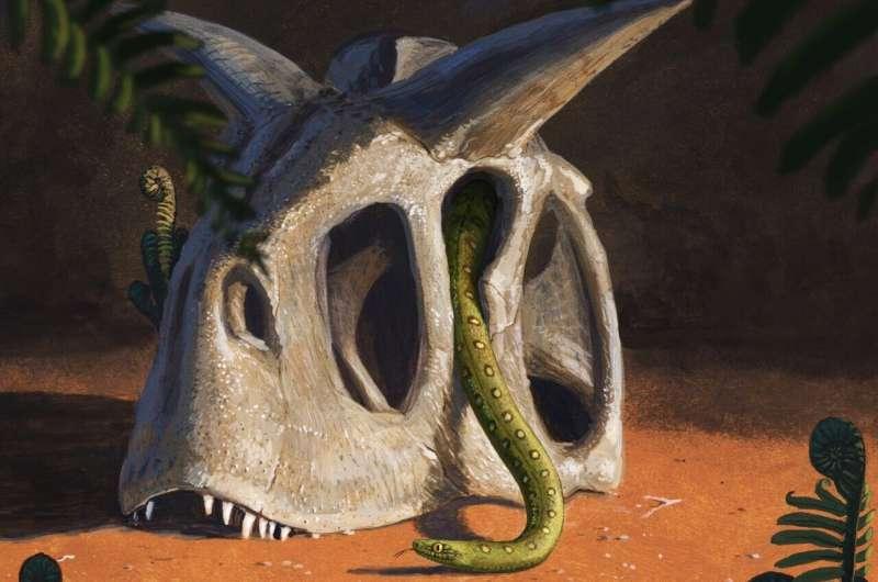 Современные змеи произошли от нескольких выживших динозавров