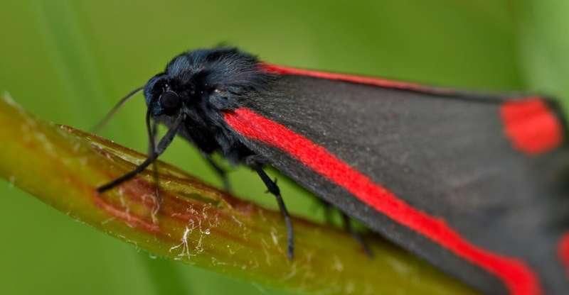 Птицы учатся избегать растений, в которых обитают опасные насекомые